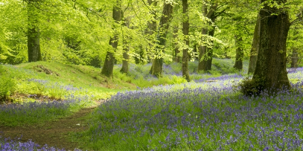 Devon: An Area of Outstanding Natural Beauty_9