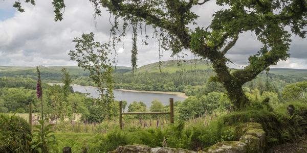 Dartmoor, Devon_2