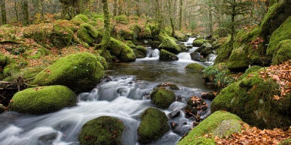 Dartmoor, Devon_3