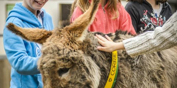 Sidmouth Donkey Sanctuary_2