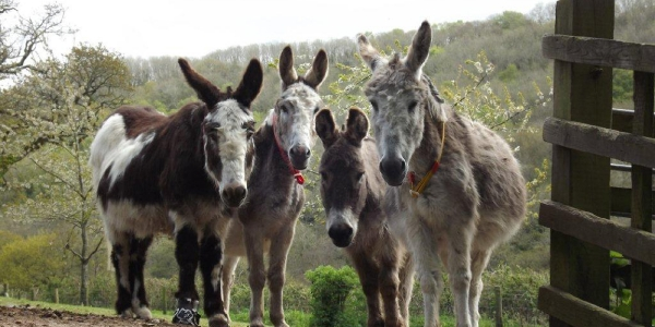 Sidmouth Donkey Sanuary_3