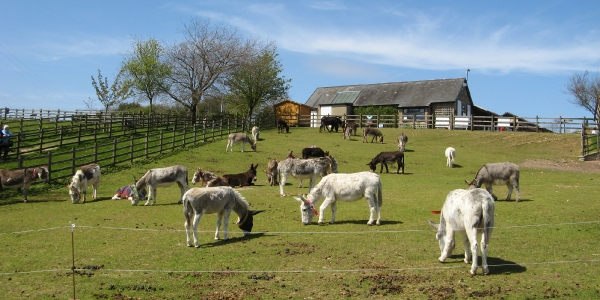 Sidmouth Donkey Sanuary_4